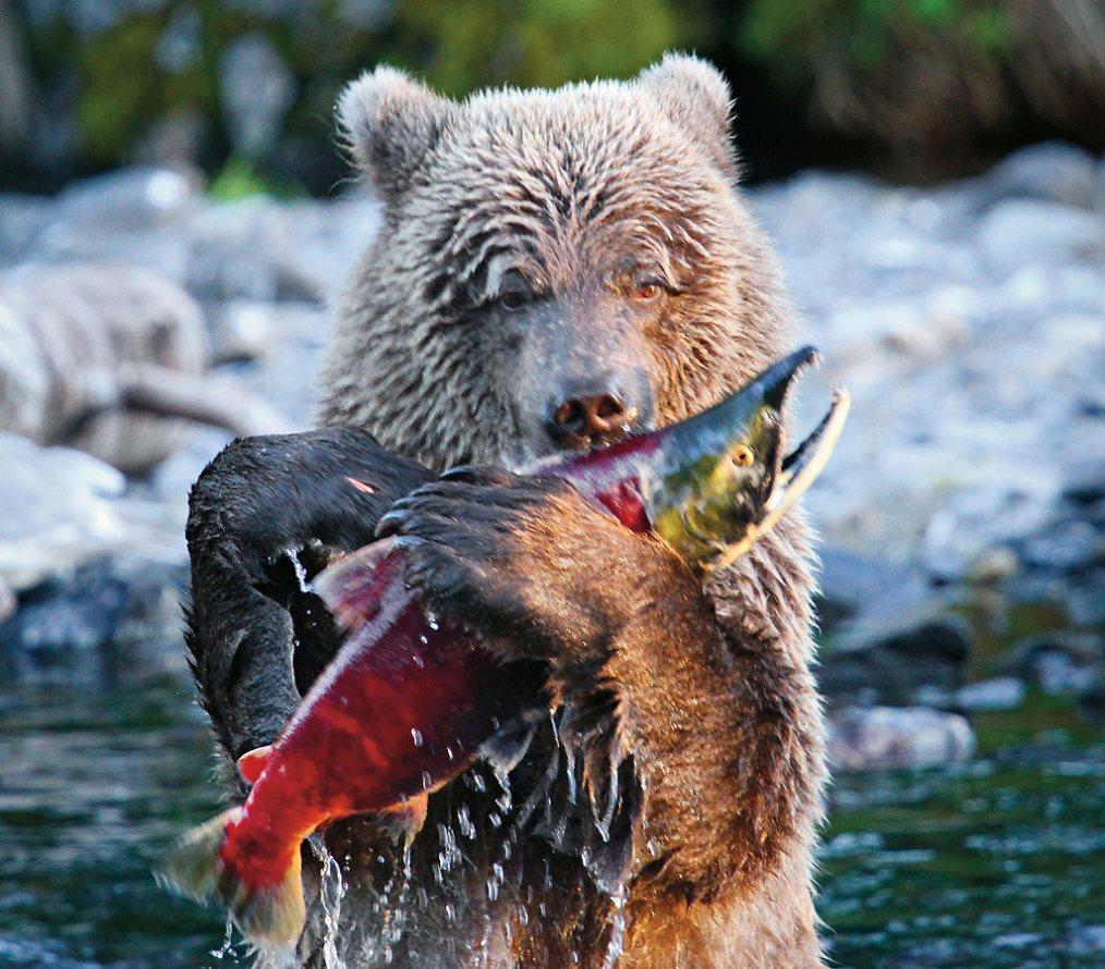 The Bear amp Monarch  149 Photos amp 48 Reviews  American